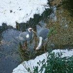 Foto de Central Park Zoo