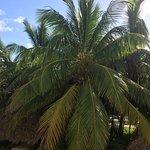 Фотография The Reserve at Paradisus Palma Real