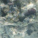 Hanauma Bay Nature Preserve Foto