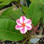 Garden flower, one of so many