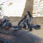 Foto Manly Sea Life Sanctuary