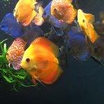 Photo of Georgia Aquarium