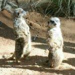 Foto Living Desert Zoo & Gardens