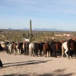 Horses lined up after ride to breakfast at the old homestead.