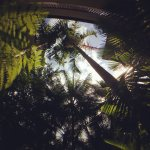 Through the palms of Coconut Grove