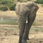 Bilde fra Shamwari Game Reserve Lodges