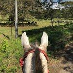 Foto de The Riding Adventure - Rancho Savegre