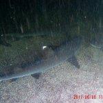 Snorkeling & sharks
