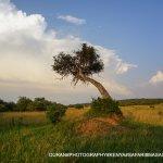 The beauty of maasai mara