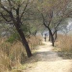 Nice treed trail