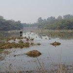 Plenty of wetland birds