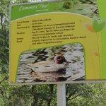 Bird signage