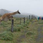 Foto de Patagonia Camp