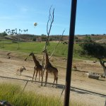 View from tram ride with balloon ride in distance