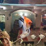 Pesce pazzo Domodossola