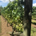 Foto Westbrook Winery