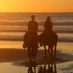 Zdjęcie Horses by Jose
