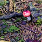 Forest floor fungi