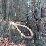 Φωτογραφία: Shrine Drive-Through Tree