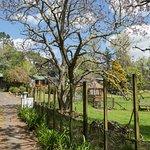 Mokoia Downs Estate B&B Foto