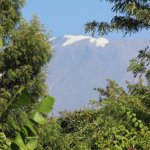 view of Kili from the grounds