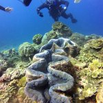 Giant Clams on reef