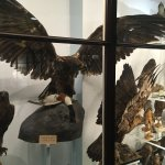 Photo of National Museum of Ireland - Natural History
