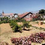 Gardens / villas
