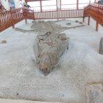 Foto de Museo El Fósil