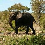 Photo de Hoyo-Hoyo Safari Lodge