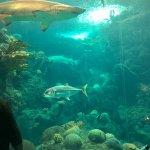 Photo de The Florida Aquarium