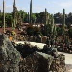 cacti and tepees