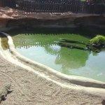 crocodile area