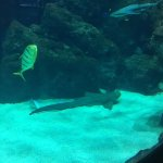 Photo of Aquarium de Lyon