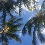 菠蘿旅館照片
