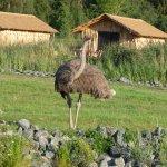 """""""Nachbarn"""" ;) MasaiMara Lodge"""
