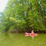 Kayaking the mangroves at Matapalo