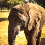 Elephants at Wild is Life ZEN Zimbabwe
