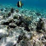 Vilamendhoo Island & House Reef Wildlife/Marine Life (Oct 2017)