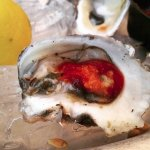 Wellfleet Oyster from Pearl