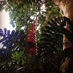 Foto de Wahiawa Botanical Garden