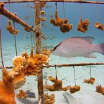 Coral tree nursery at buddy dive house reef