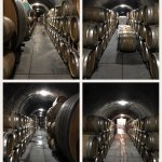 Photo de Schug Carneros Estate Winery