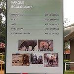 Zoologico de Americana Foto
