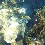 Fish at Crab Cay