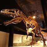 Dinosaur fossil at the Houston Museum of Natural Science