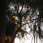 Beautiful lanterns hanging in the tree add to the ambiance