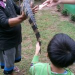 Photo de Samui Crocodile Farm