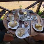 Afternoon tea pre-rainforest walk