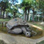 de très beau spécimen de tortue